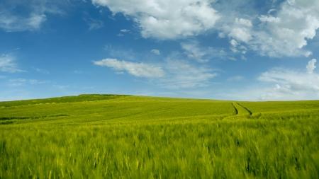 Yeşilin Kalbi Arnavutköy